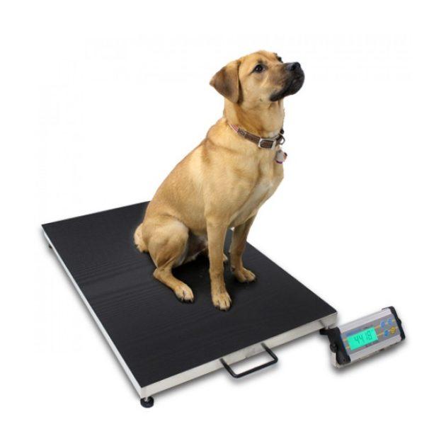 1- Balance pour chien