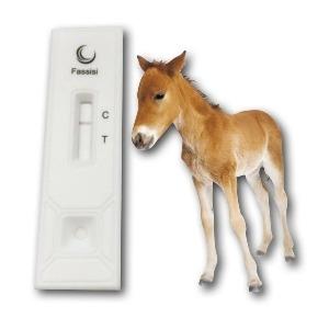 Equine IgG