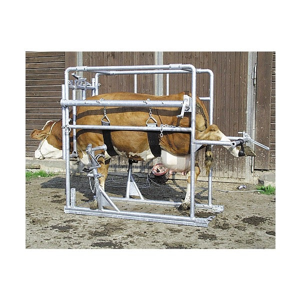 Travail pour bovins